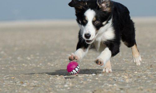 Verschillende soorten hondenspeeltjes